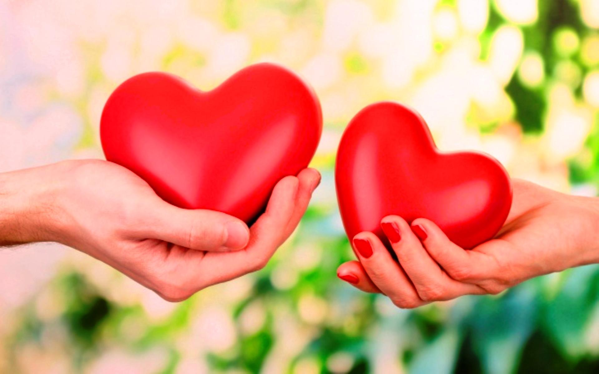 hand hearts wallpaper -
